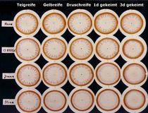 Rundbilder von 4 Sorten aus 5 aufeinanderfolgenden Samenzustandsformen
